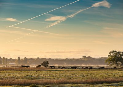 Faversham-049